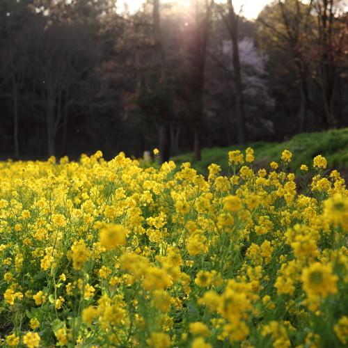 Spring_0001